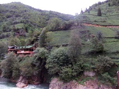 Teeplantage im gebirgigen Hinterland von Rize