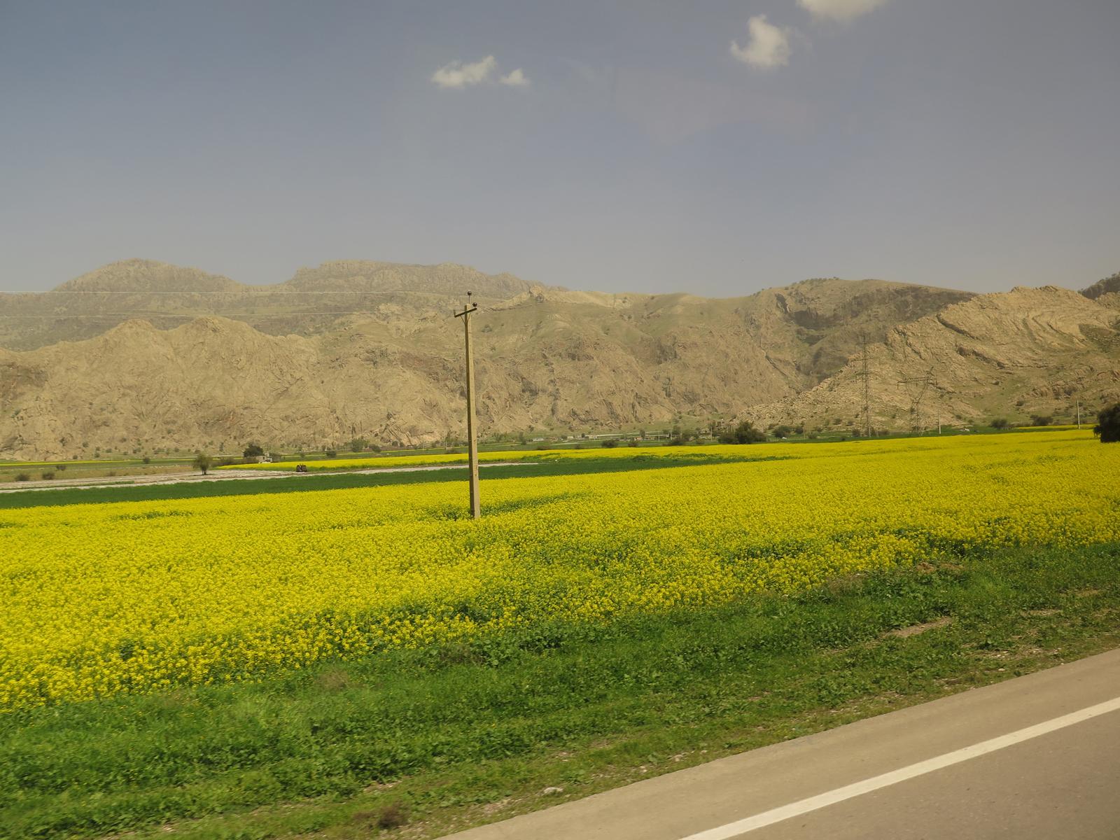 Auf der Königstrasse Richtung Shiraz